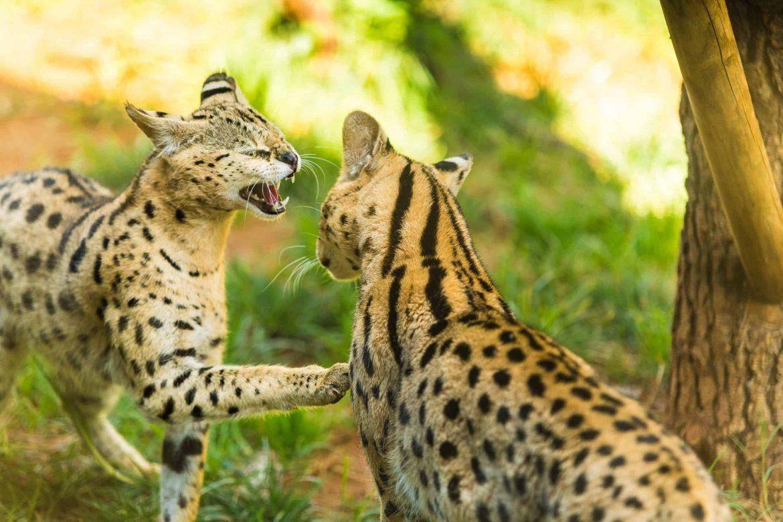 Branding Campaign – Rabat Zoologique Parc